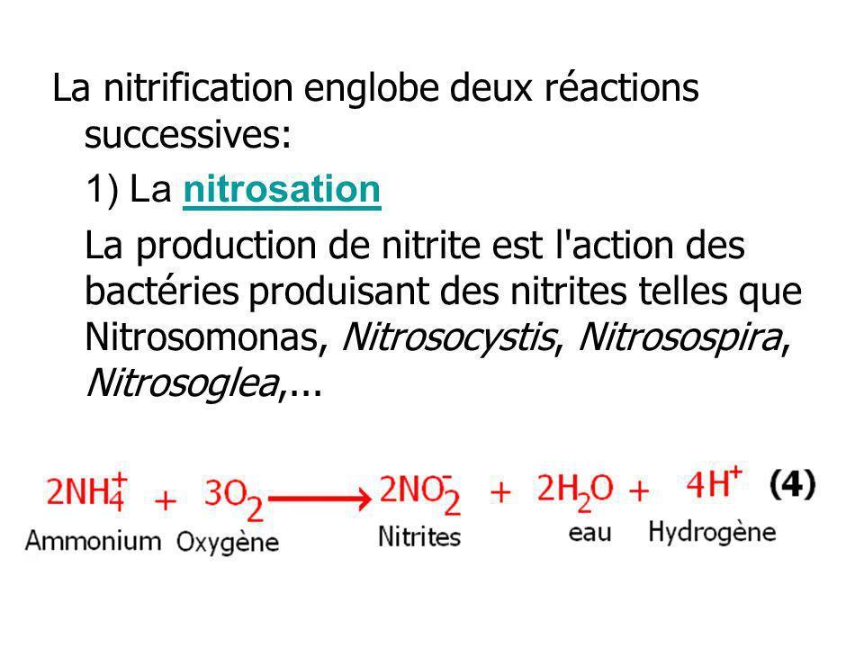 La nitrification englobe deux réactions successives: