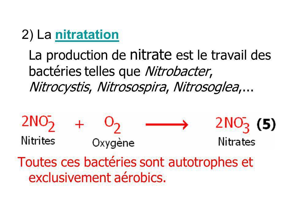 2) La nitratation La production de nitrate est le travail des bactéries telles que Nitrobacter, Nitrocystis, Nitrosospira, Nitrosoglea,...