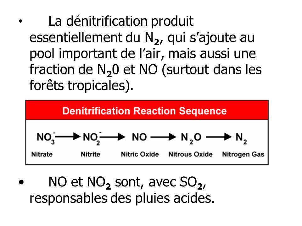 La dénitrification produit essentiellement du N2, qui s'ajoute au pool important de l'air, mais aussi une fraction de N20 et NO (surtout dans les forêts tropicales).