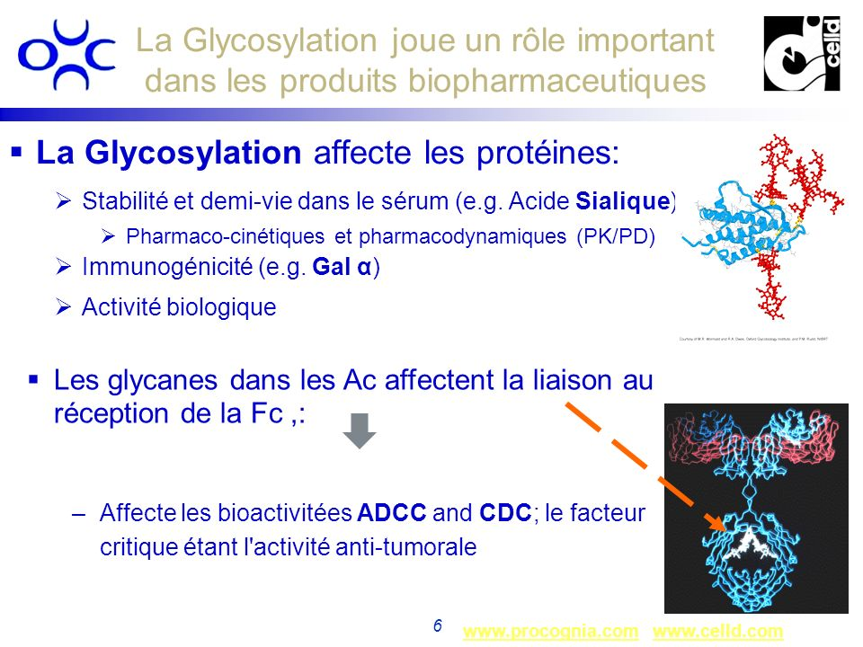 La Glycosylation affecte les protéines: