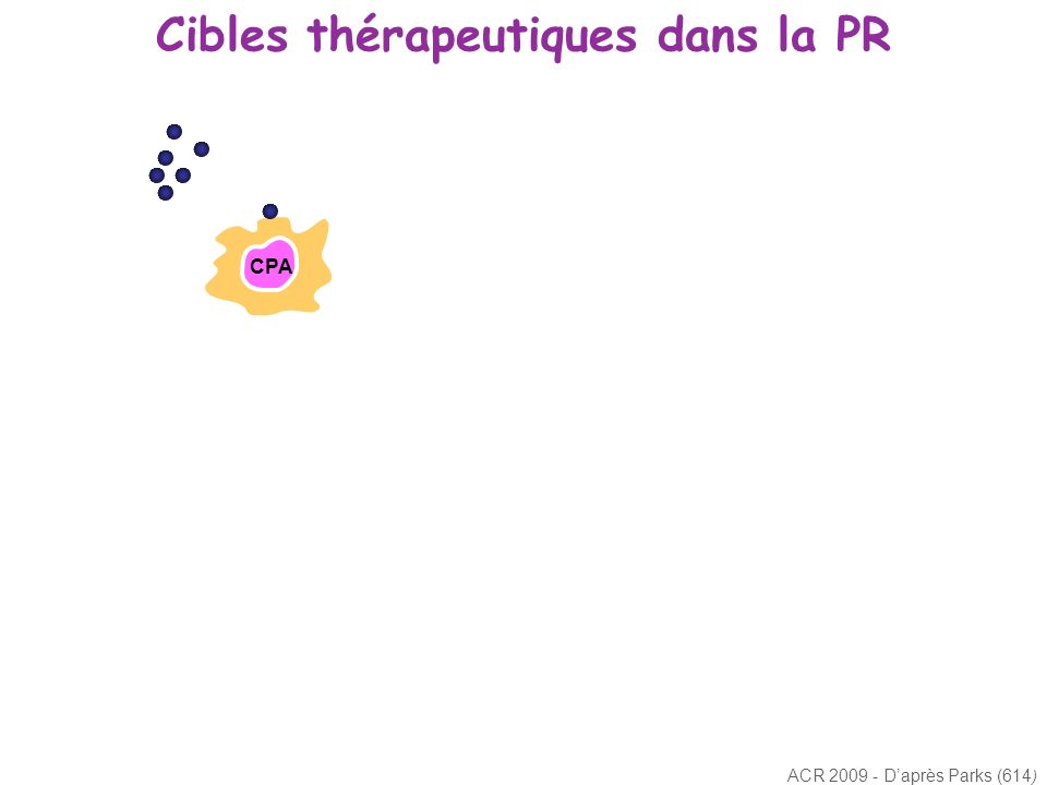 Cibles thérapeutiques dans la PR