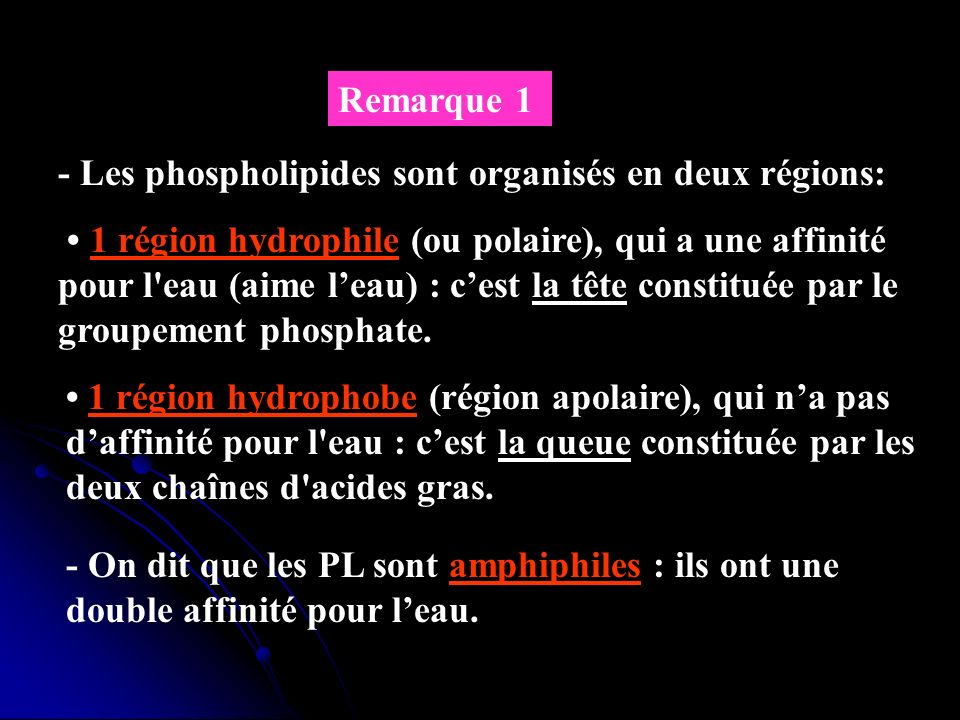 Remarque 1- Les phospholipides sont organisés en deux régions: