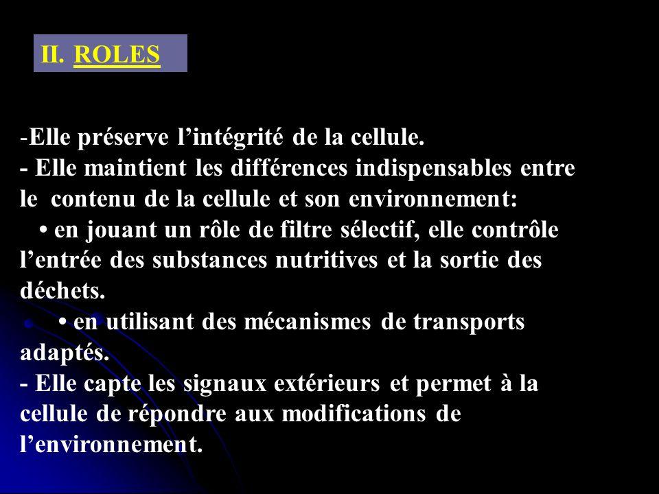 II. ROLESElle préserve l'intégrité de la cellule.