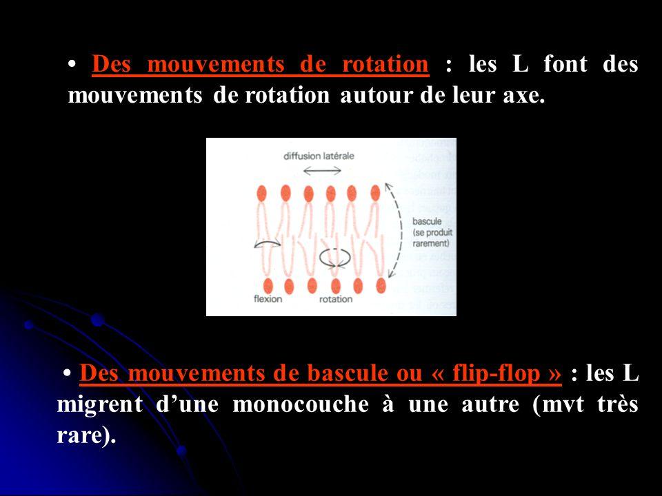 • Des mouvements de rotation : les L font des mouvements de rotation autour de leur axe.