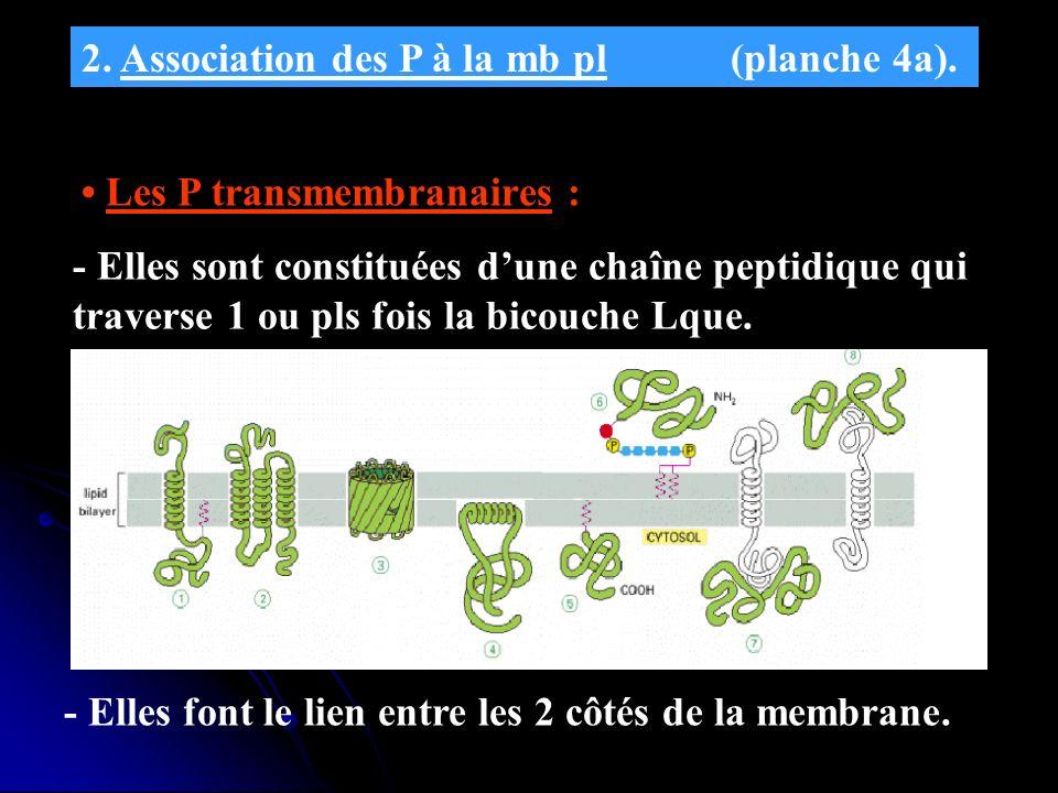 2. Association des P à la mb pl (planche 4a).