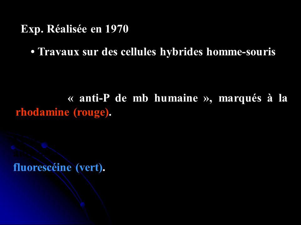 Exp. Réalisée en 1970 • Travaux sur des cellules hybrides homme-souris.