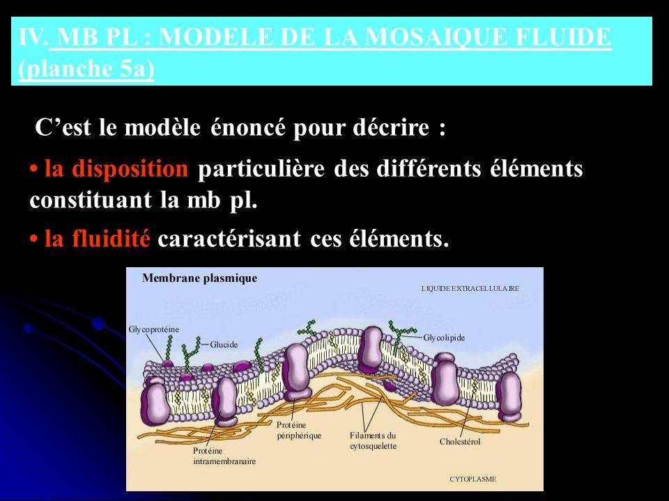 IV. MB PL : MODELE DE LA MOSAIQUE FLUIDE (planche 5a)