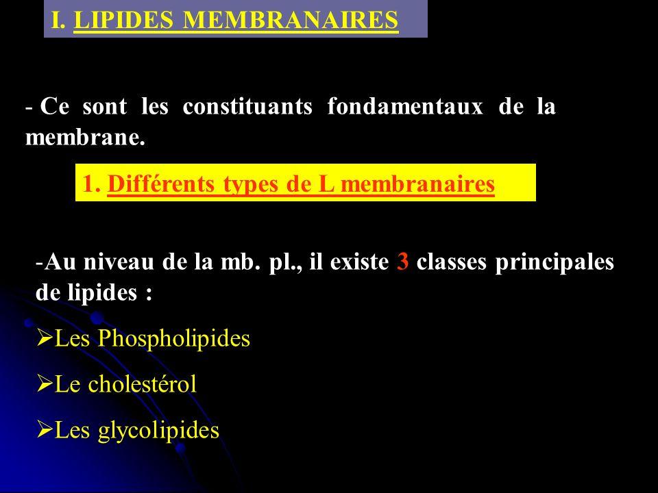 I. LIPIDES MEMBRANAIRES