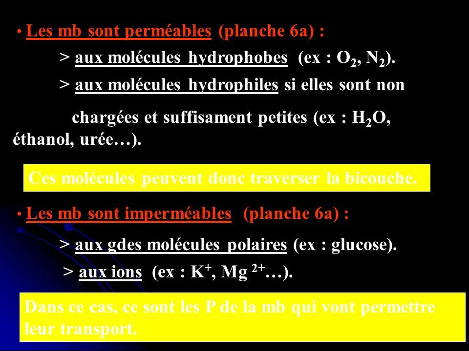> aux molécules hydrophobes (ex : O2, N2).