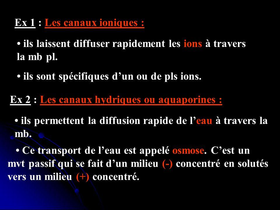 Ex 1 : Les canaux ioniques :