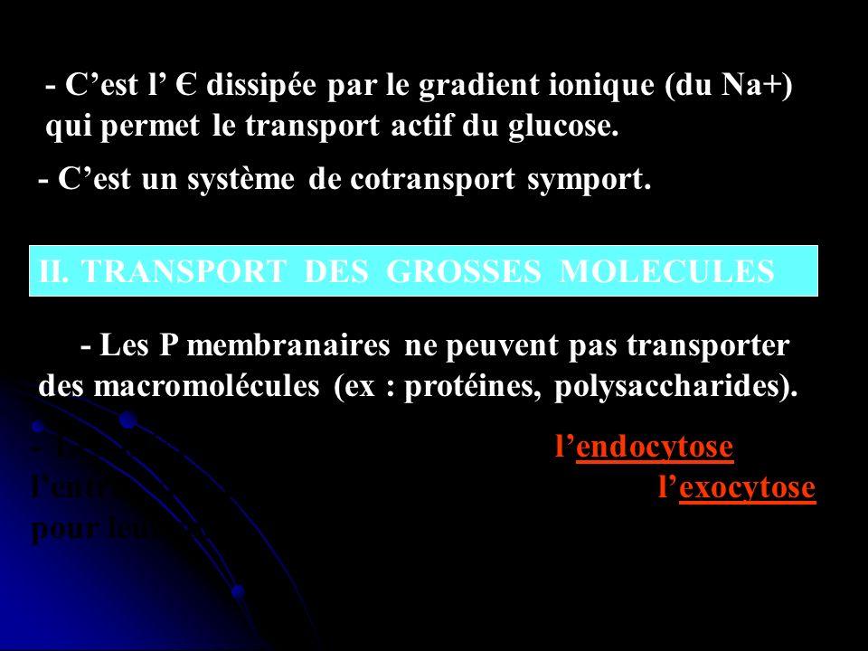 - C'est l' Є dissipée par le gradient ionique (du Na+) qui permet le transport actif du glucose.