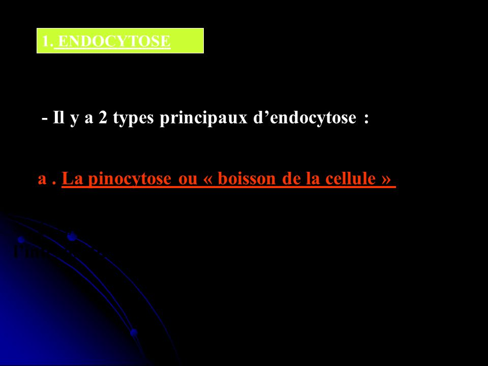 - Il y a 2 types principaux d'endocytose :