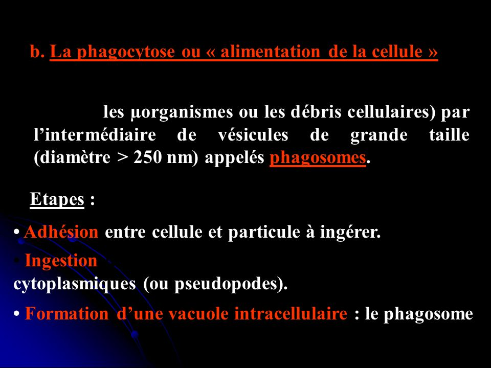 b. La phagocytose ou « alimentation de la cellule »