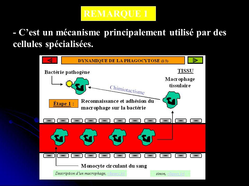 REMARQUE 1 - C'est un mécanisme principalement utilisé par des cellules spécialisées.
