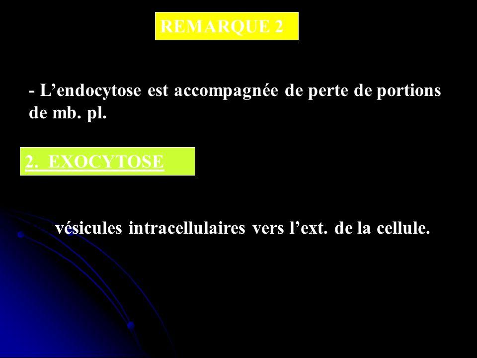 REMARQUE 2 - L'endocytose est accompagnée de perte de portions de mb. pl. 2. EXOCYTOSE.
