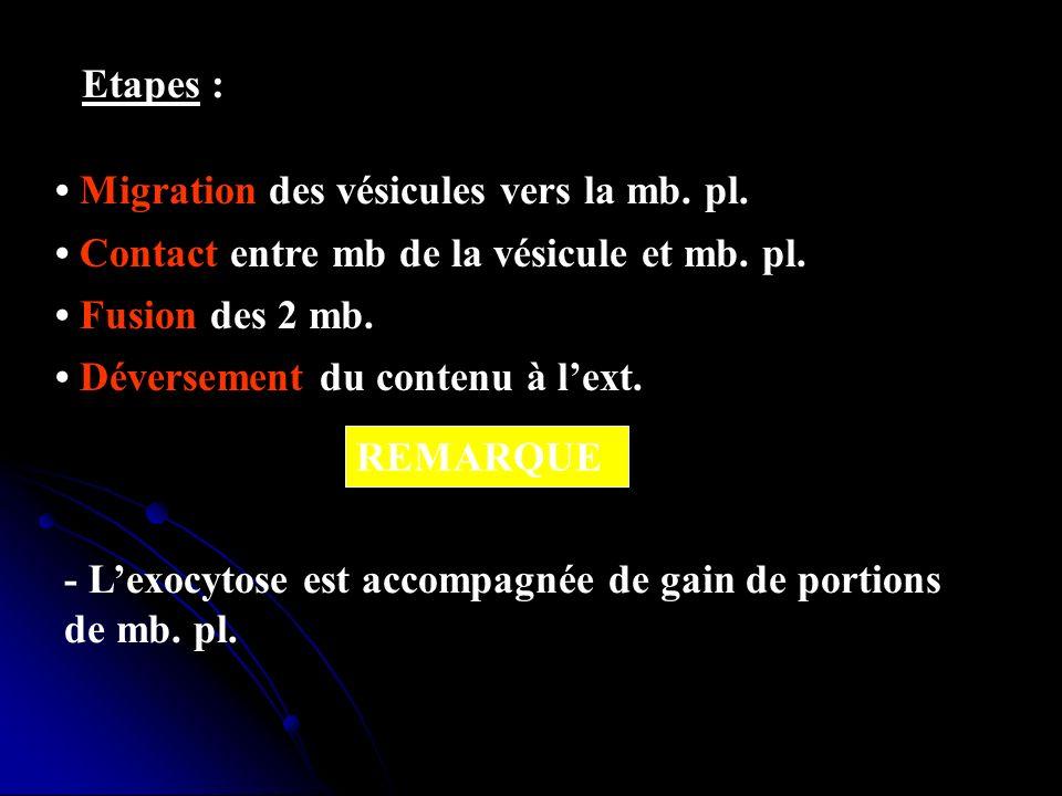 Etapes :• Migration des vésicules vers la mb. pl. • Contact entre mb de la vésicule et mb. pl. • Fusion des 2 mb.