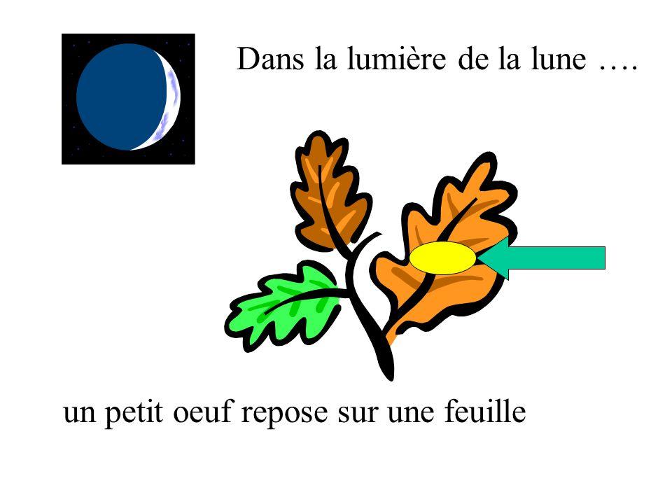 Dans la lumière de la lune ….