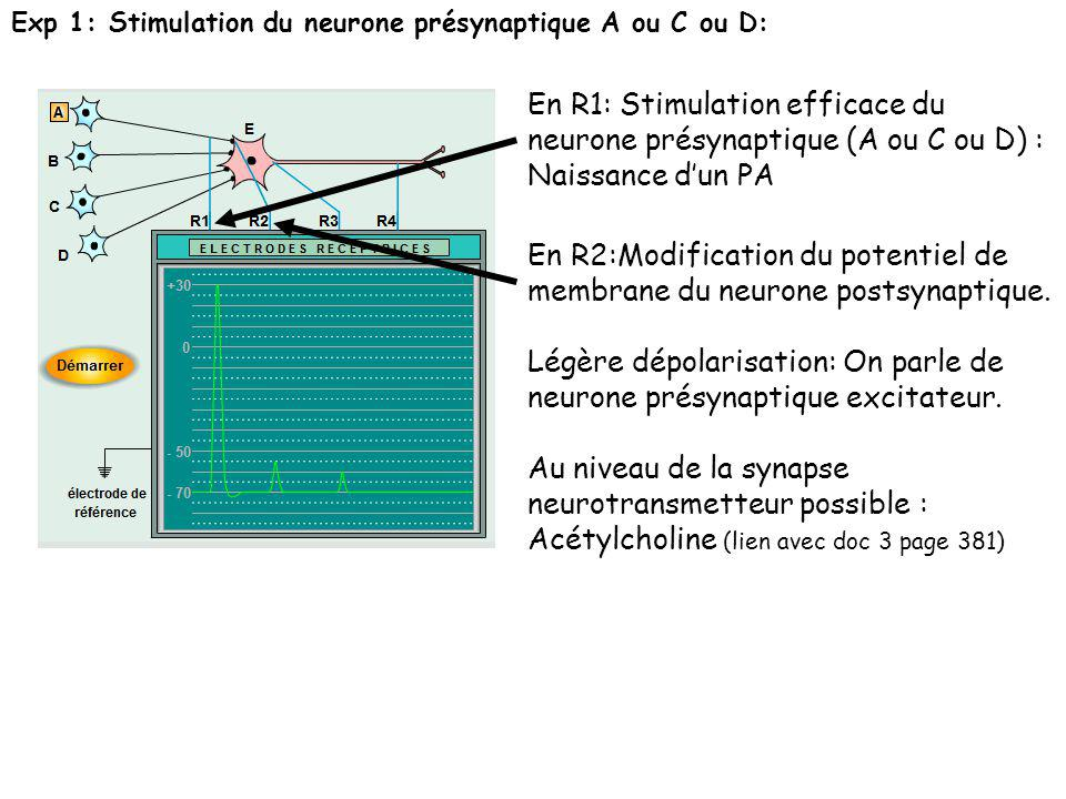 En R2:Modification du potentiel de membrane du neurone postsynaptique.