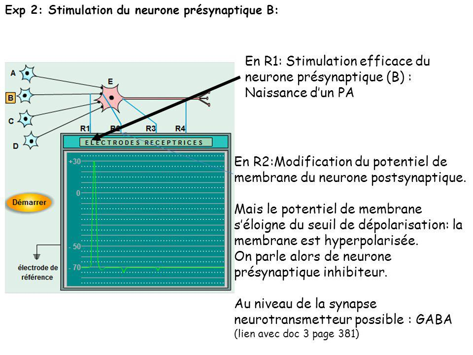 En R1: Stimulation efficace du neurone présynaptique (B) :
