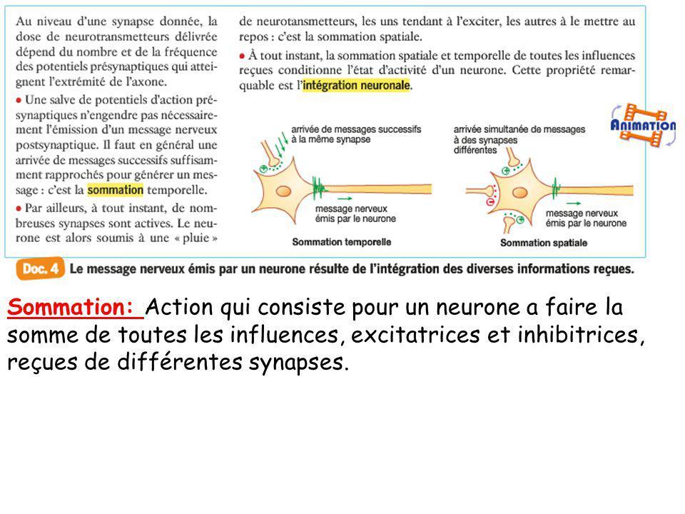Sommation: Action qui consiste pour un neurone a faire la somme de toutes les influences, excitatrices et inhibitrices, reçues de différentes synapses.