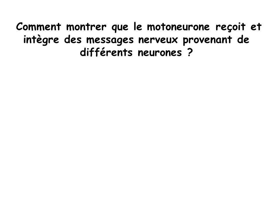 Comment montrer que le motoneurone reçoit et intègre des messages nerveux provenant de différents neurones