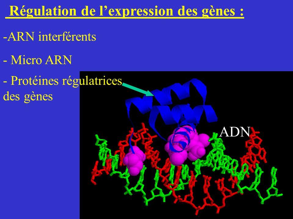 Régulation de l'expression des gènes :