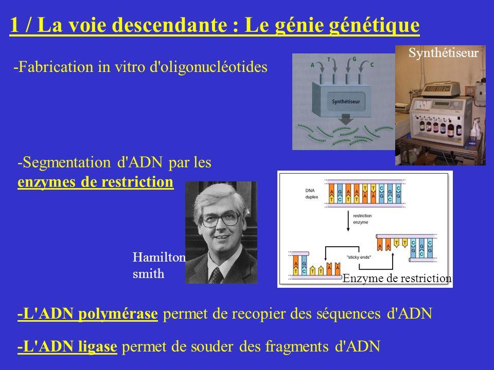 1 / La voie descendante : Le génie génétique