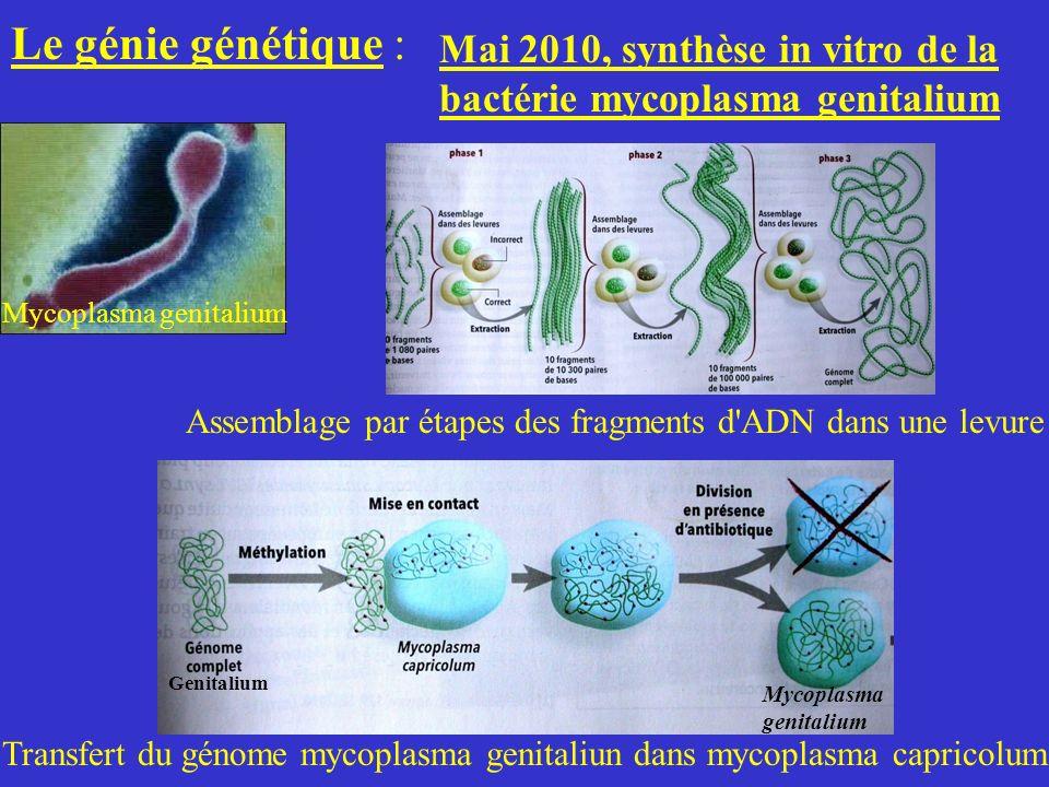 Le génie génétique : Mai 2010, synthèse in vitro de la bactérie mycoplasma genitalium. Mycoplasma genitalium.