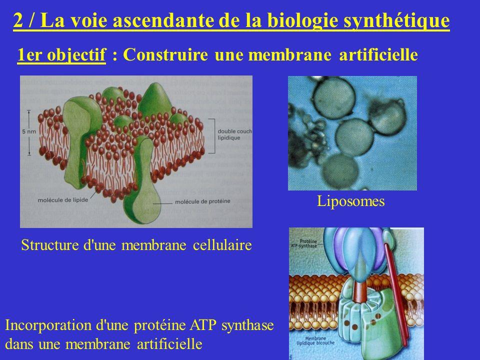 2 / La voie ascendante de la biologie synthétique