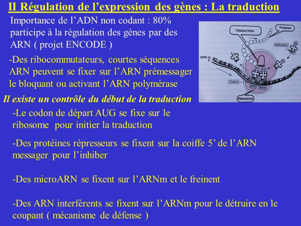 II Régulation de l'expression des gènes : La traduction
