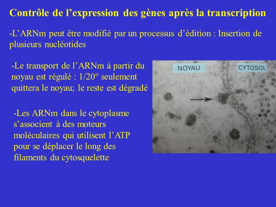 Contrôle de l'expression des gènes après la transcription