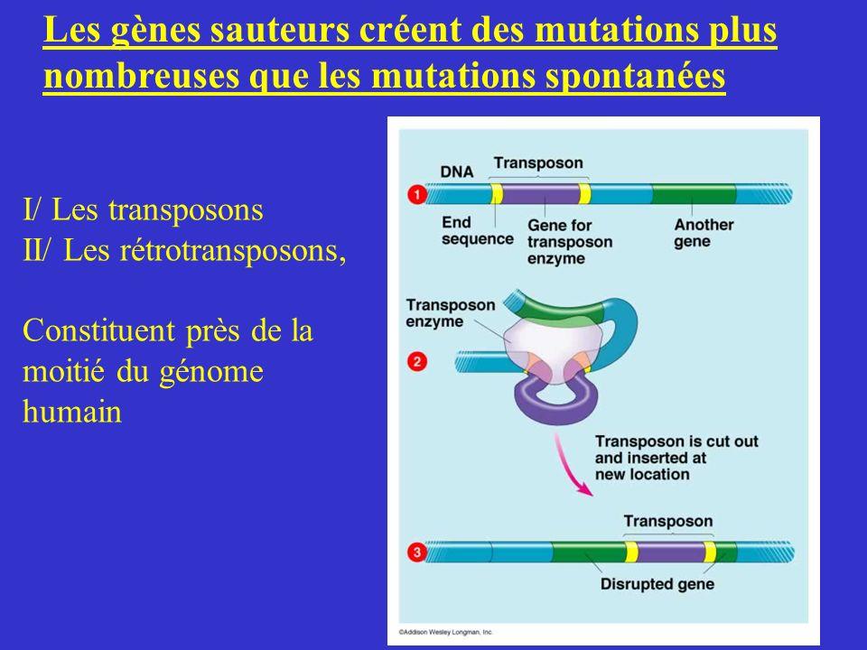 Les gènes sauteurs créent des mutations plus nombreuses que les mutations spontanées