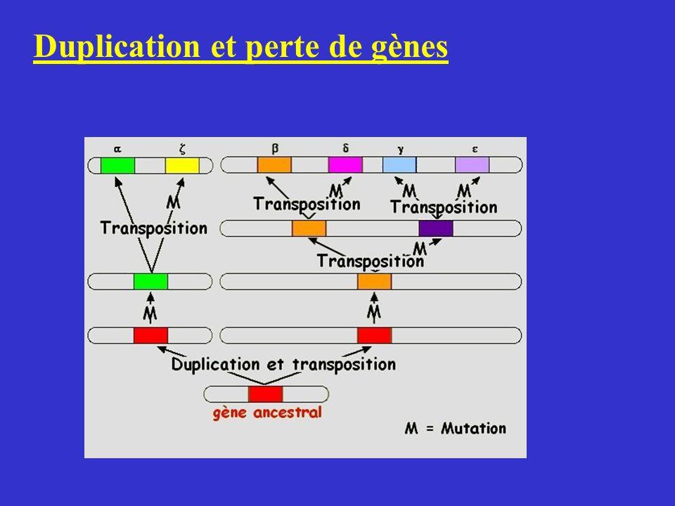 Duplication et perte de gènes