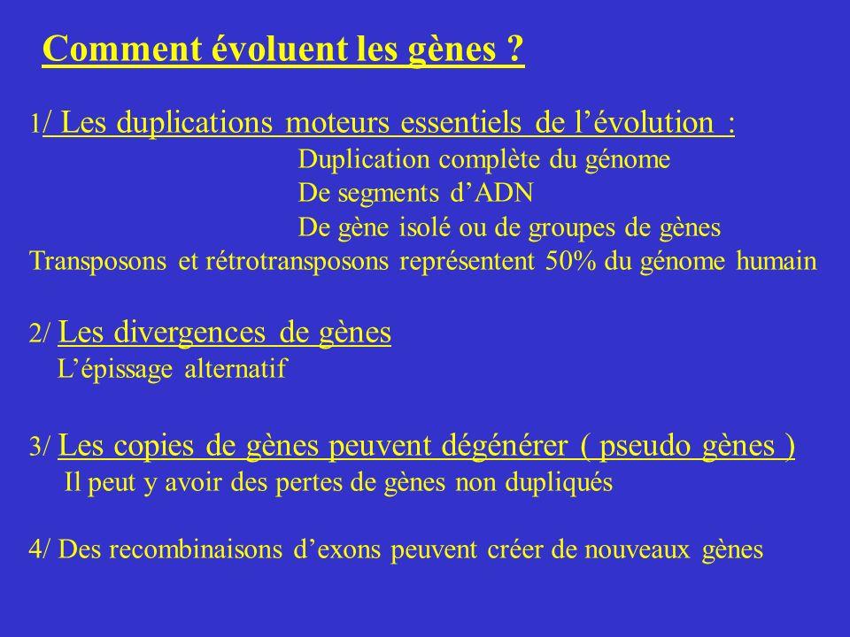 Comment évoluent les gènes