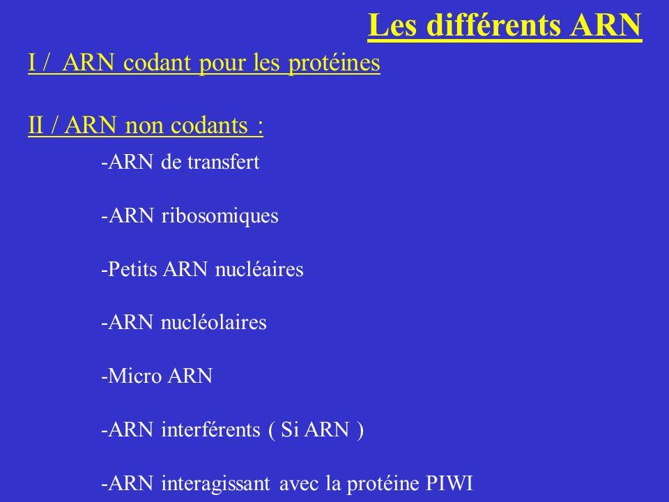 Les différents ARN I / ARN codant pour les protéines