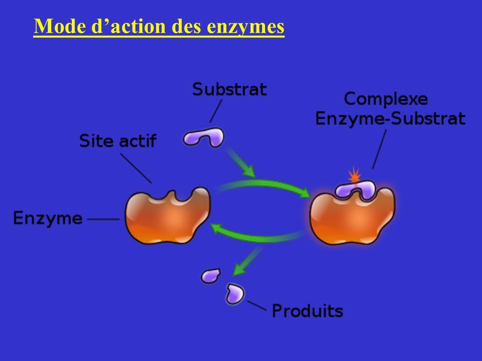 Mode d'action des enzymes