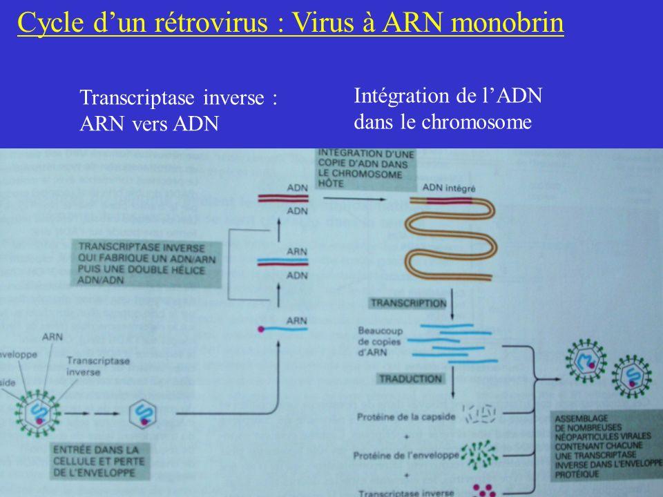 Cycle d'un rétrovirus : Virus à ARN monobrin