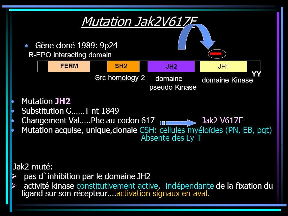 Mutation Jak2V617F Structure des tyrosine kinases Jak KB