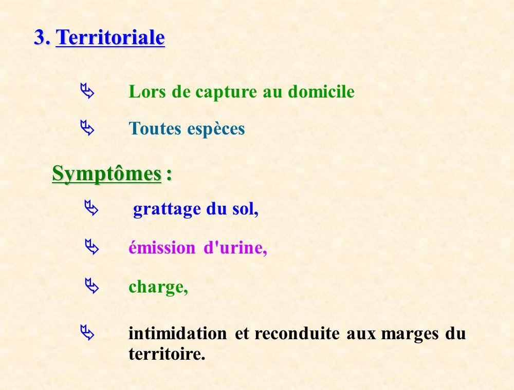 3. Territoriale Symptômes :  Lors de capture au domicile