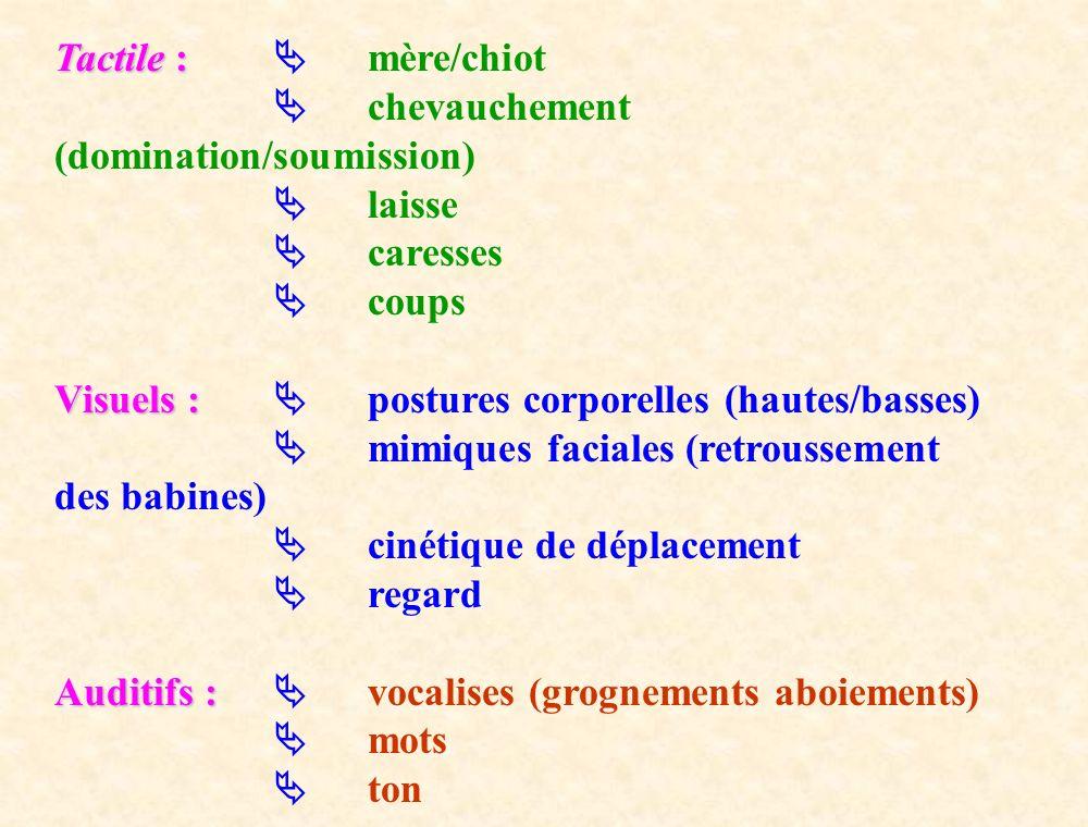 Tactile :  mère/chiot  chevauchement (domination/soumission)  laisse.  caresses.  coups.