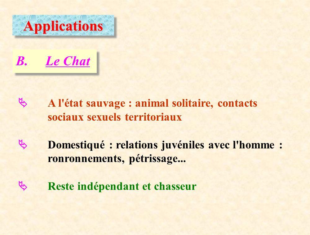 Applications B. Le Chat.  A l état sauvage : animal solitaire, contacts sociaux sexuels territoriaux.