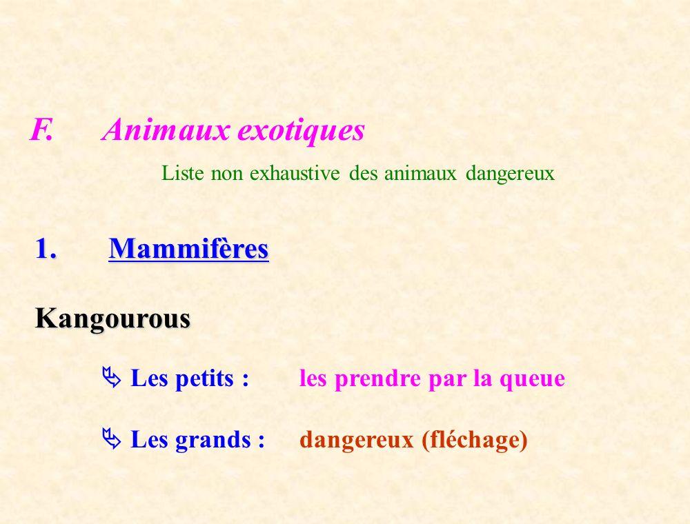F. Animaux exotiques 1. Mammifères Kangourous