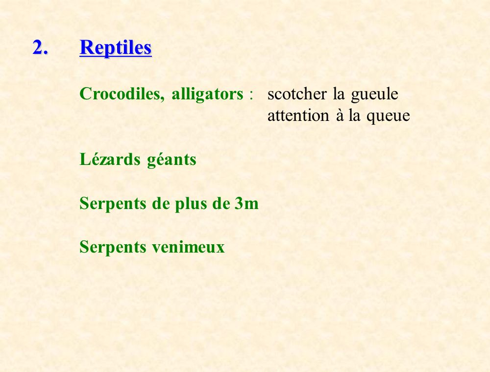 2. Reptiles Crocodiles, alligators : scotcher la gueule