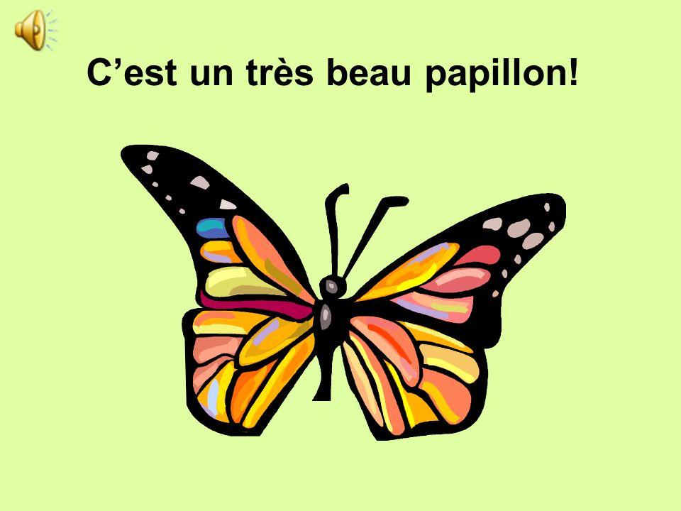 C'est un très beau papillon!