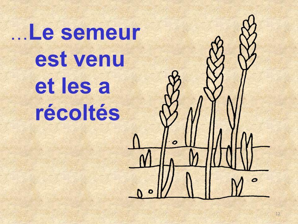 …Le semeur est venu et les a récoltés