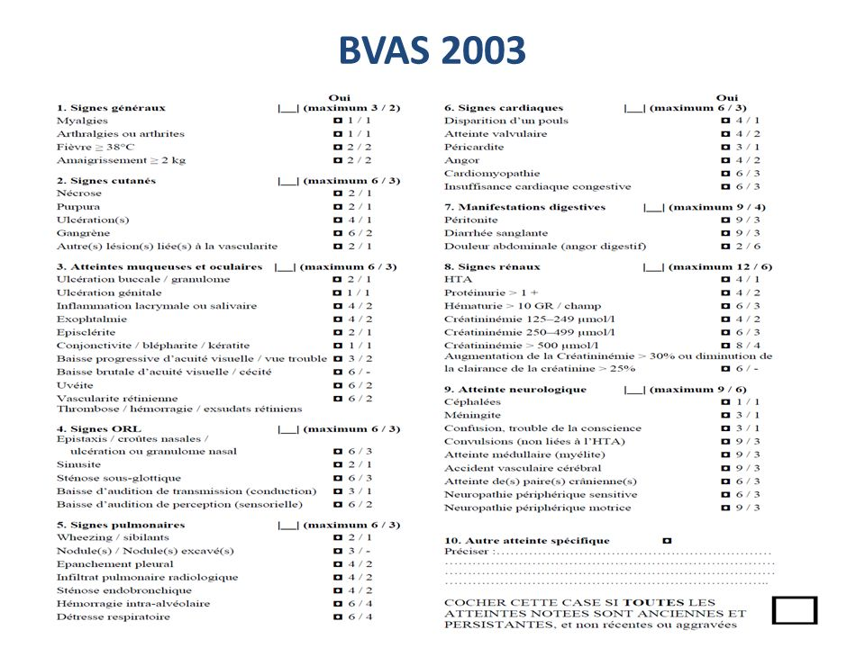 BVAS 2003