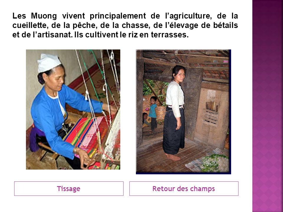 Les Muong vivent principalement de l'agriculture, de la cueillette, de la pêche, de la chasse, de l'élevage de bétails et de l'artisanat. Ils cultivent le riz en terrasses.