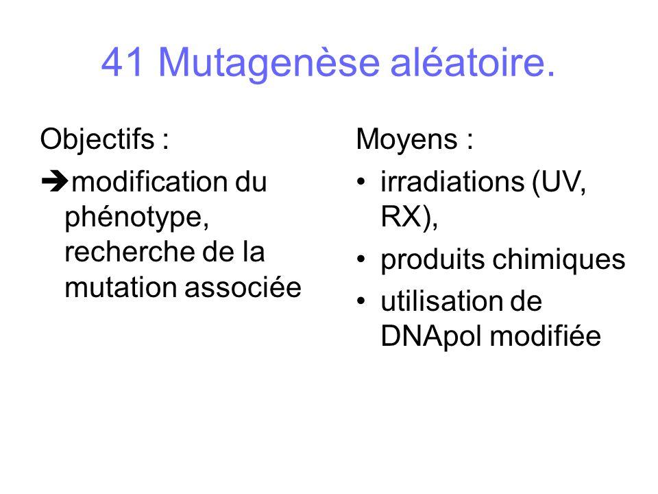 41 Mutagenèse aléatoire. Objectifs :