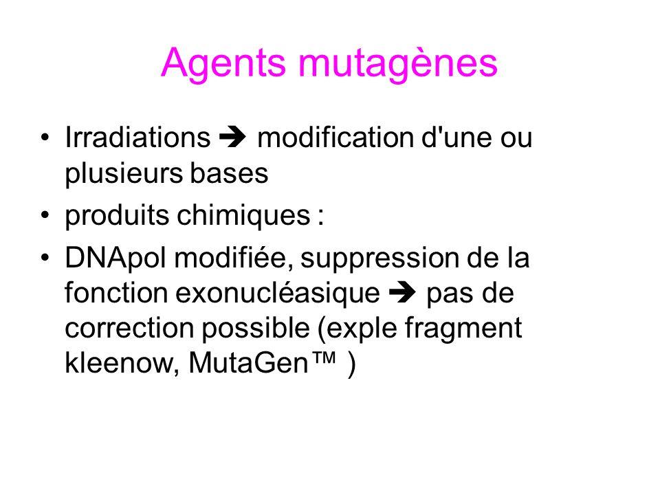 Agents mutagènes Irradiations  modification d une ou plusieurs bases