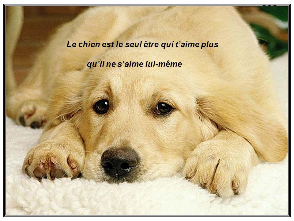 Le chien est le seul être qui t'aime plus